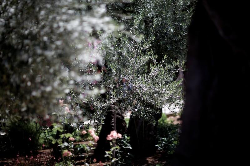 Garten Gethsemani, uralte Bäume und ein Neuzugang: Der Olivenbaum, den Papst Franziskus gepflanzt hat