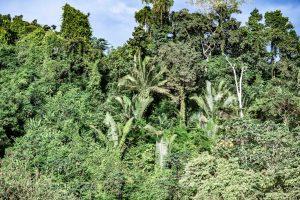 Regenwald Amazonien